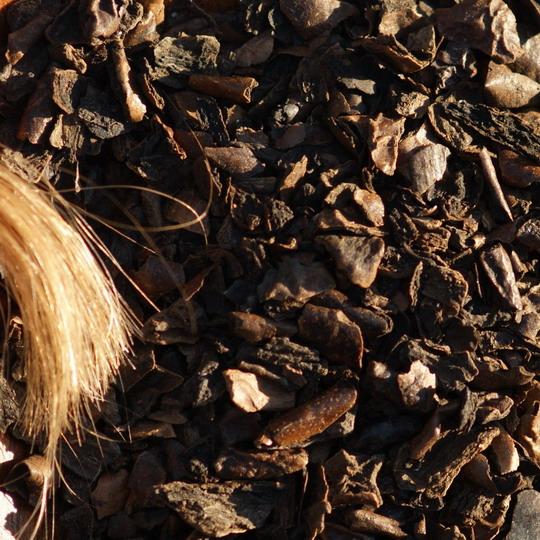 Juglans regia, Walnuss, gefärbte Haare