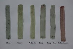 Mit Pflanzenfarben färben, Holunder, Sambucus nigra