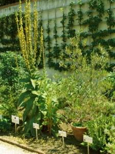 Klostergarten Seligenstadt Faerberpflanzen